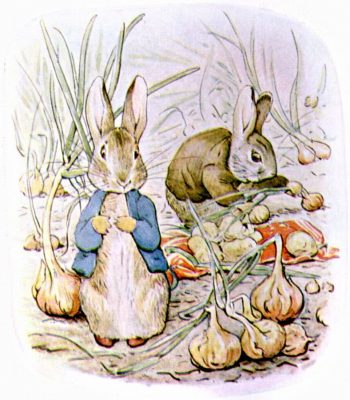 Beatrix Potter's Illustration of Peter and Benjamin gather onions for Mrs. Rabbit