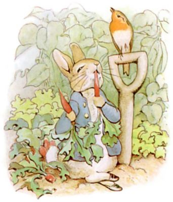 Beatrix Potter's illustration of Peter Rabbit